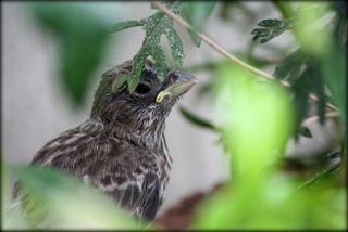 Lil birdie target