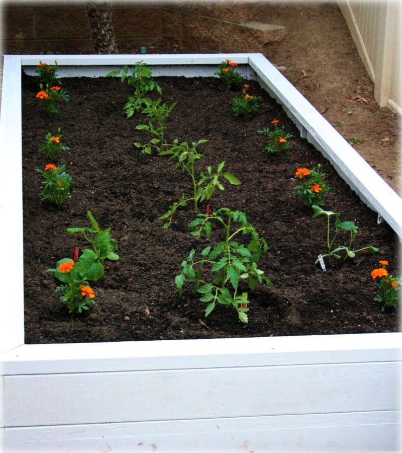 Homegrowngardenplanted1