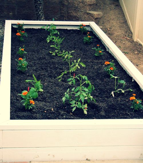 Homegrowngardenplanted